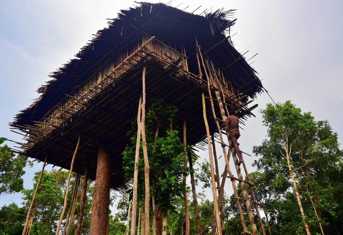 Picture of: Stone Korowai Tribe Cultural Trek West Papua